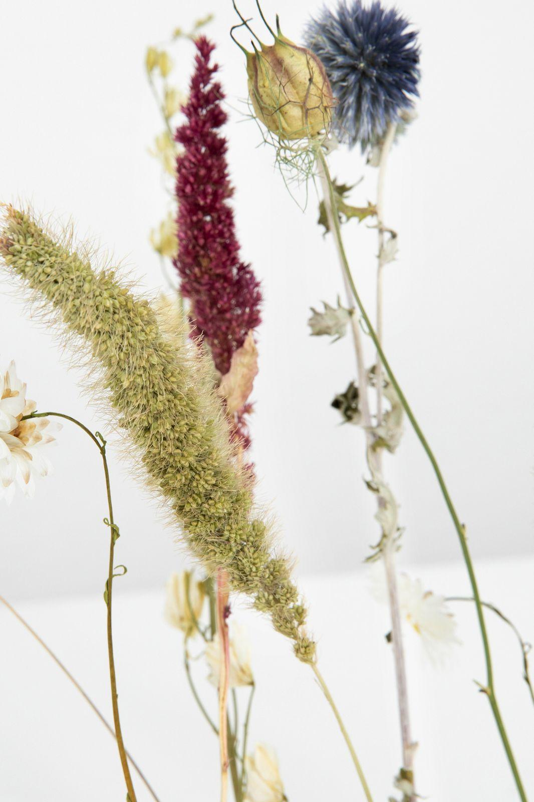 Bloomon Flowergram Crisp Cotton - Homeland | Sissy-Boy