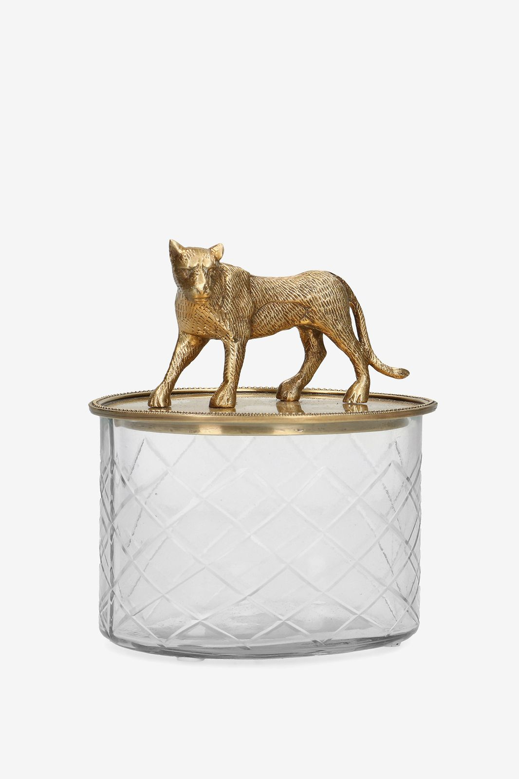 Glas box met luipaard