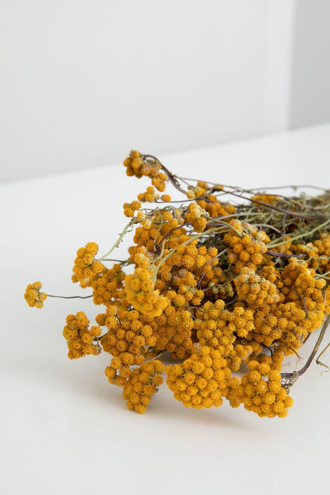 Gele droogbloemen lona - Homeland | Sissy-Boy